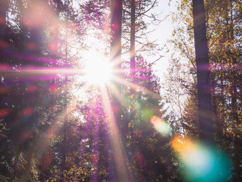 sun shining through trees to represent solar control window film